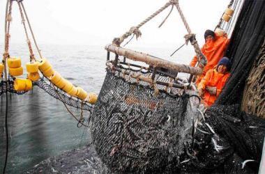 imagen-pesca
