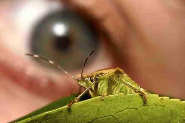 Carreras profesionales: qué hace un biólogo