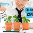 cultura corporativa, clima laboral, marca, empresa