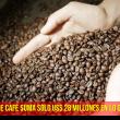 exportaciones de café