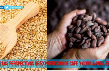 Producción de cafe y quinua Perú