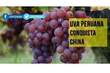 Nueve millones de cajas de uva peruana ingresaron a China