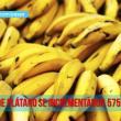 exportación de plátano Perú