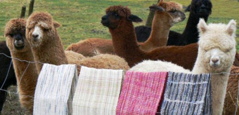 El mercado de la fibra de alpaca