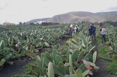 Producción de cochinilla Arequipa