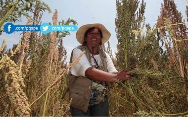 quinua, quinua peruana, Ministerio de Agricultura, exportaciones