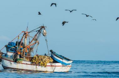 ADEX exportaciones pesca