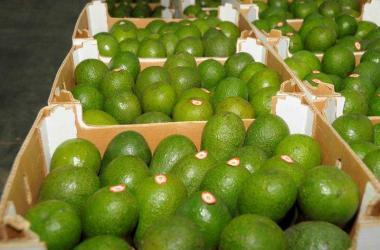 Exportaciones, agroexportaciones, paltas, Adex, agricultura, exportaciones peruanas, exportaciones Perú, comercio exterior