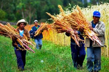 exportación quinua Perú