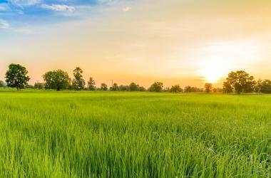 Agricultura generación empleo