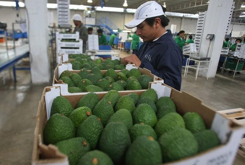 palta, palta hass, exportaciones, agroexportaciones, China,