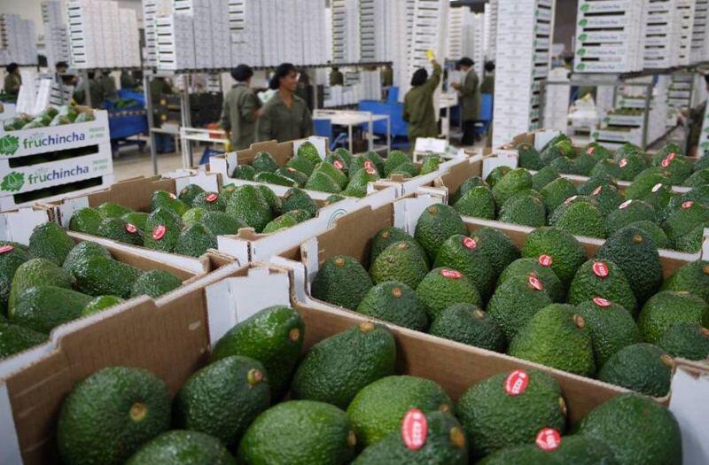 Palta, palta hass, exportaciones, agroexportaciones, agroexportaciones peru