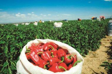 Exportaciones, agroexportaciones, Adex, agricultura, Lambayeque
