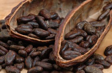 Cacao con valor agregado: nuevo objetivo del Grupo Palmas