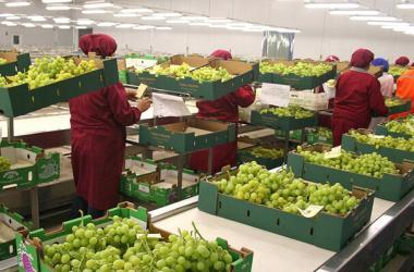 exportaciones; agroexportaciones; Minagri, agricultura