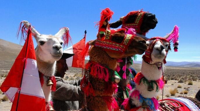 Produce, innovacion, competitividad, camelidos, sector textil, Arequipa