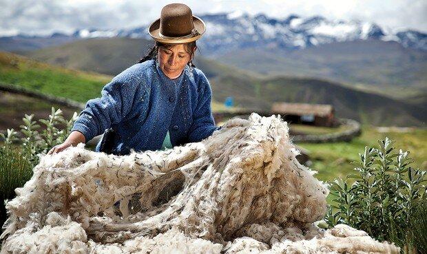 alpaca, mincetur, exportaciones