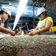 Exportaciones, agroexportaciones, Minagri, cafe