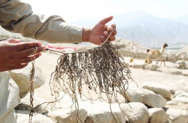 emprendedores, inventos, historia del peru, inventos peruanos, indecopi