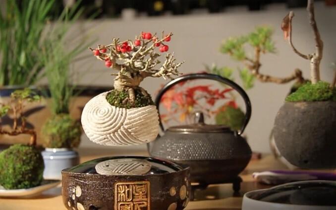 air bonsai, kickstarter, japoneses