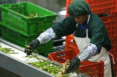 Emprendimiento, cómo exportar, agroexportaciones, negocios