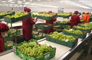 Exportaciones, agroexportaciones, Adex, uva, exportaciones peruanas