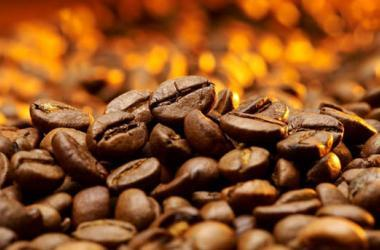 café, sierra exportadora, cafés especiales