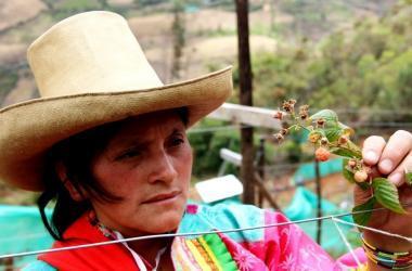agricultura, Cajamarca, frambuesa, Sierra Exportadora
