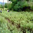 Fenómeno El Niño, minagri, agricultura, agro