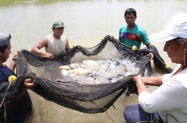 Adex, acuicultura, producción, productores, exportacion peru