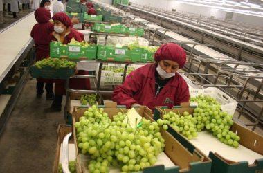 Perú logró agroexportaciones por US$ 5,800 millones en 2016