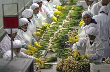 Exportaciones, Adex, cómo exportar, agroexportaciones