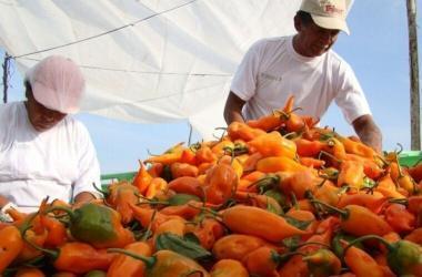 Exportaciones, ajíes, pimientos, Adex, International Pepper Conference