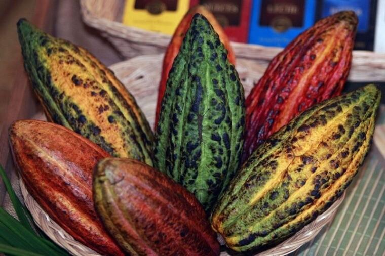 Indecopi, cacao, productores, capacitación