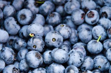 Arándano sería la tercera fruta más exportada en 2017