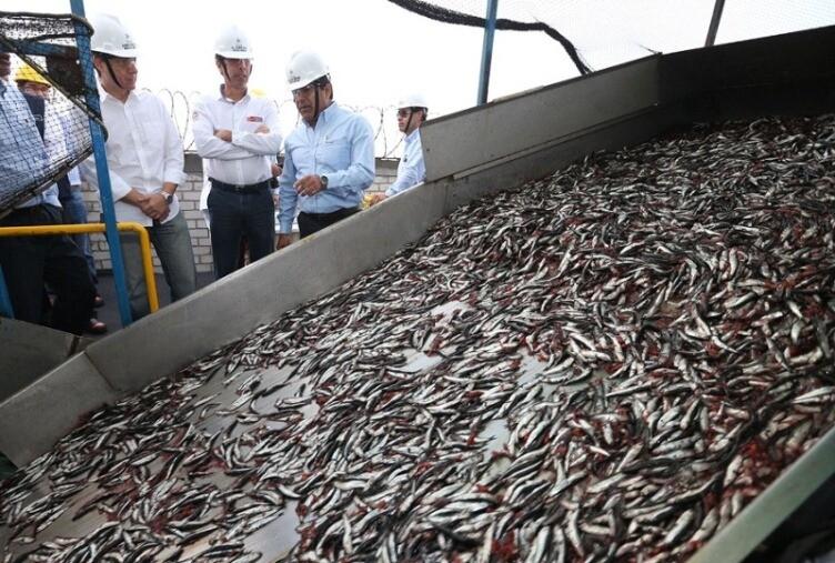 pesca, SNI, empleos, materia prima, pescado
