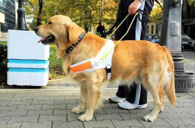 perros guías, personas invidentes, CONADIS, discapacidad visual