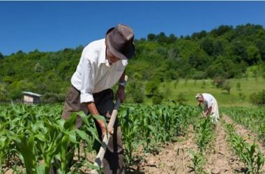Agricultores, plataforma virtual, Sierra Exportadora, productores, agricultura, ecommerce
