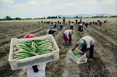 Minagri, agricultura, agro, Fenómeno El Niño, crecimiento