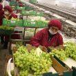 Exportaciones, uvas, productos no tradicionales, agroexportaciones, COMEX