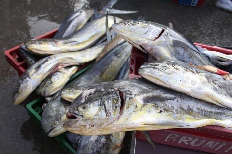 Perico, Produce, veda, pesca, pescado