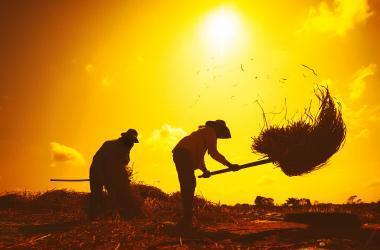 agricultura, sector agropecuario, minagri, Fenómeno El Niño