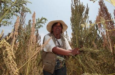 Productores, agricultura, INEI, sector agrario, agricultura