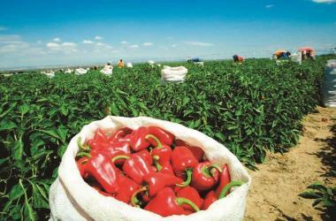 Exportaciones, agroexportaciones, ajíes, pimientos, Adex