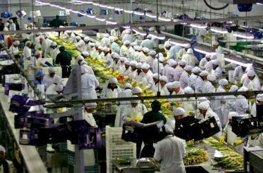 ADEX: agroexportaciones son intensivas en mano de obra