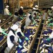 Exportaciones de productos hidrobiológicos alcanzaron los US$ 391 millones