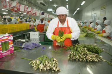 APEC: agroexportaciones no tradicionales del Perú crecerían 15%