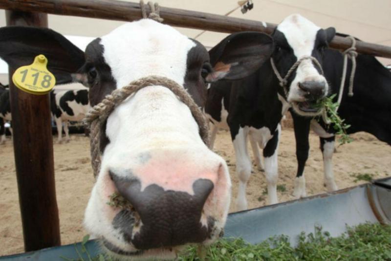 Minagri: ganadería podría tener un crecimiento de 6% anual