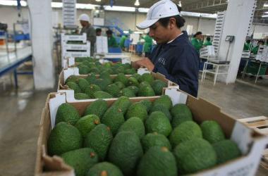 Adex: existen 425 oportunidades de negocios no aprovechadas con países APEC