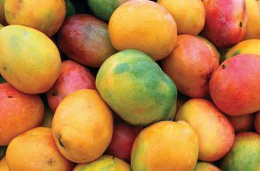 Mangos de Piura.